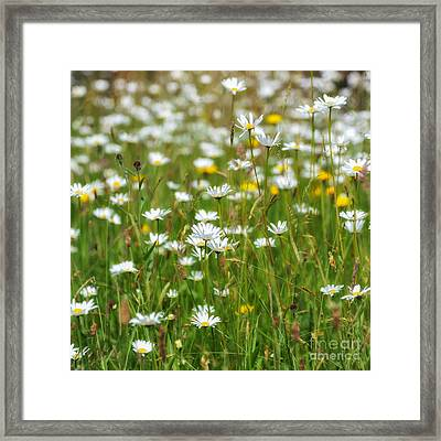 Wild Flower Meadow Framed Print by Janet Burdon