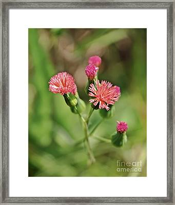 Framed Print featuring the photograph Wild Flower by Olga Hamilton