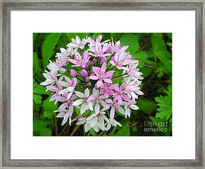 Wild Flower2 Framed Print by Michael Rushing