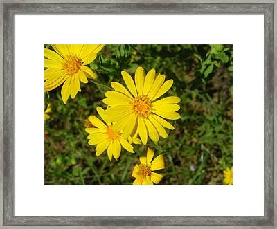 Wild Flower4 Framed Print by Michael Rushing