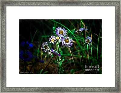 Wild Flowers 115 Framed Print by Arne Hansen