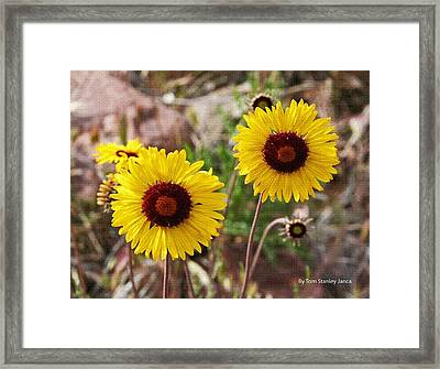 Framed Print featuring the photograph Wild Flowers Above The Rim by Tom Janca
