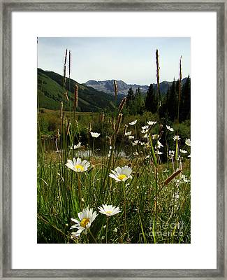 Wild Flowers At Ashcroft Framed Print