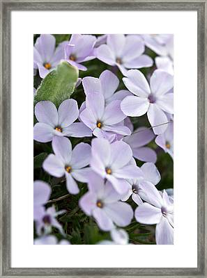 Framed Print featuring the photograph Wild Flowers by Bob Noble Photography