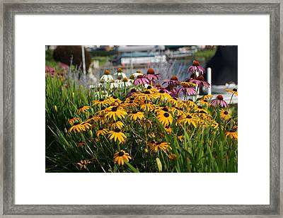 Wild Flowers By The Lake Framed Print by Thomas Fouch