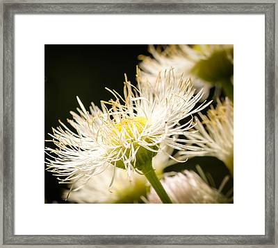 Framed Print featuring the photograph Wild Flowers by Cathy Donohoue