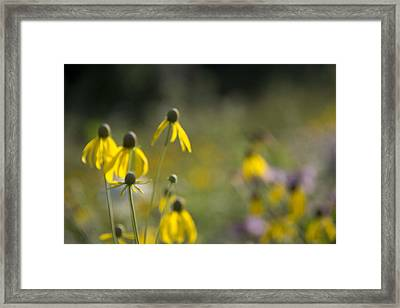 Wild Flowers Framed Print by Daniel Sheldon