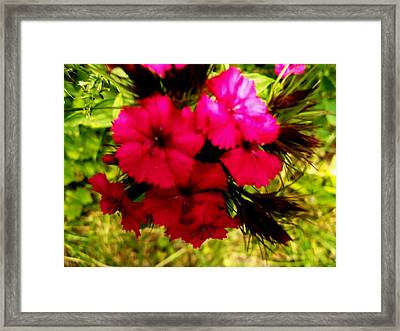 Framed Print featuring the photograph Wild Flowers by Eric Switzer