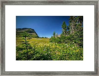 Wild Flowers Glacier National Paintedpark   Framed Print by Rich Franco