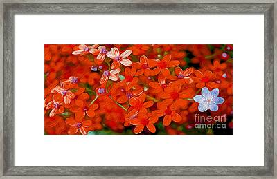 Wild Flowers Framed Print by Jon Neidert