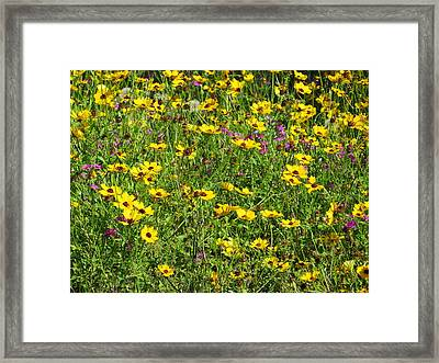 Wild Flowers Framed Print by Tim Townsend