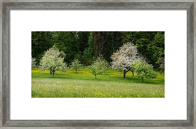 Wild Flowers With Blossoming Apple Framed Print by Panoramic Images