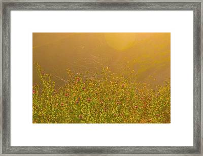 Wild Flowers With Webs Framed Print