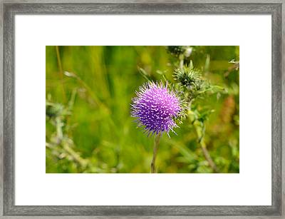 Wild Forest Flowers Framed Print by Miguel Winterpacht