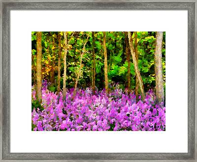 Wild Forest Violets Framed Print by Georgiana Romanovna