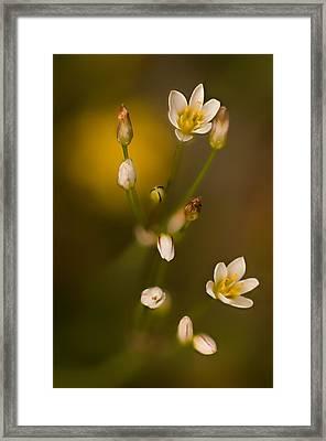 Wild Garlic Framed Print by Robert Charity