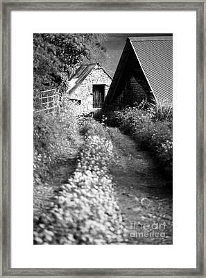 Wild Garlic Track Framed Print by Anne Gilbert