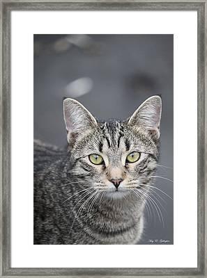 Wild Gem Framed Print by Amy Gallagher