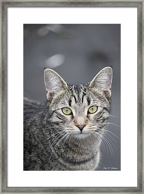 Wild Gem Framed Print