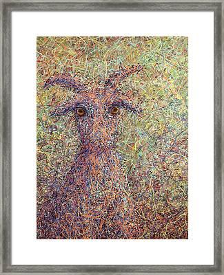 Wild Goat Framed Print by James W Johnson