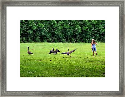 Wild Goose Chase Framed Print by Kristin Elmquist