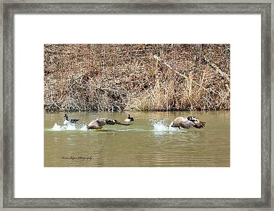 Framed Print featuring the digital art Wild Goose Chase by Lorna Rogers Photography