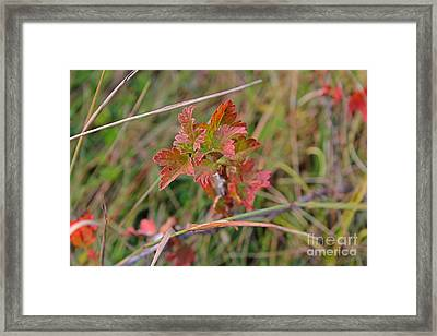 Framed Print featuring the photograph Wild Gooseberry Leaves by Ann E Robson