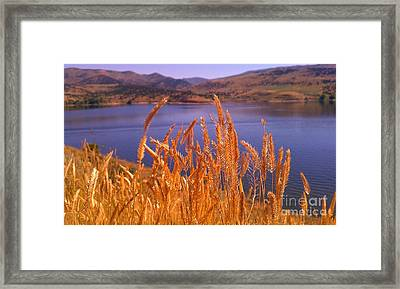Framed Print featuring the photograph Wild Grain by Chris Tarpening