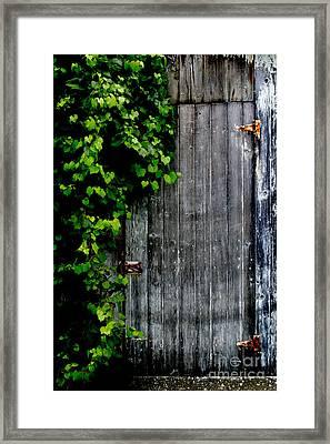 Wild Grape Vine Door Framed Print