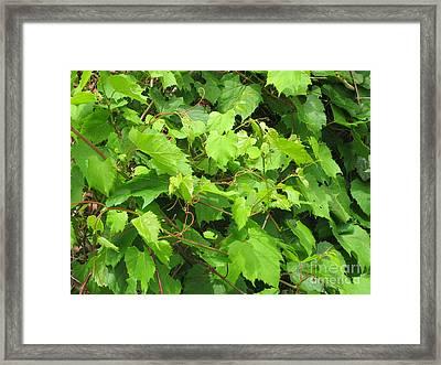 Wild Grapevine Framed Print