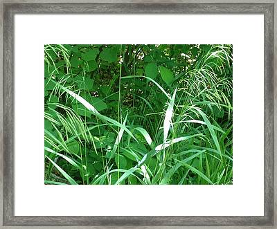 Wild Grass Framed Print by Ron Torborg