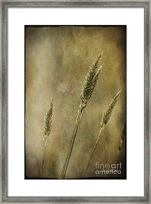 Framed Print featuring the photograph Wild Grasses by Chris Armytage
