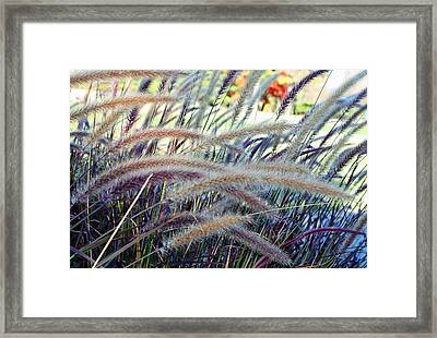 Wild Grasses In Autumn Framed Print by Ellen Tully