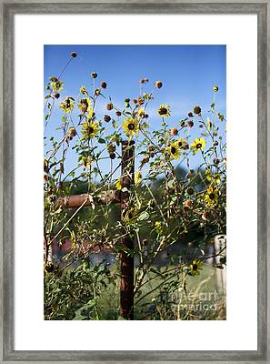 Framed Print featuring the photograph Wild Growth by Erika Weber