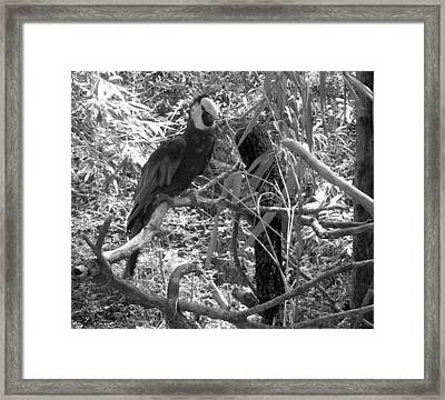 Framed Print featuring the photograph Wild Hawaiian Parrot Black And White by Joseph Baril