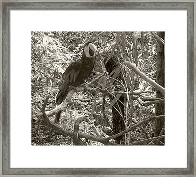Framed Print featuring the photograph Wild Hawaiian Parrot Sepia by Joseph Baril