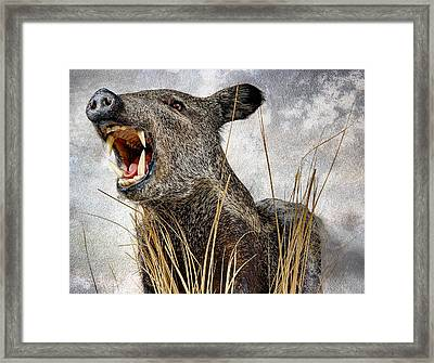 Wild Hawaiian Pig Framed Print by Daniel Hagerman