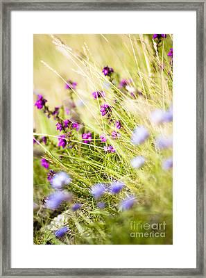 Wild Heather And Sheepsbit Scabious Flowers Framed Print by Jan Bickerton