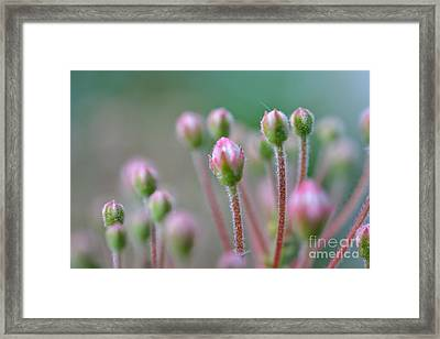 Framed Print featuring the photograph Wild Honeysuckles by Denise Tomasura