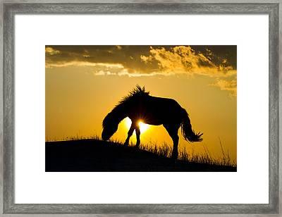 Wild Horse And Setting Sun Framed Print