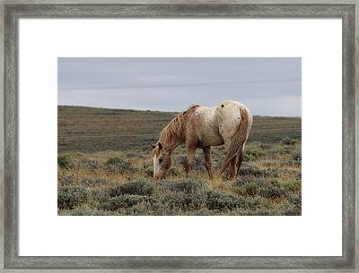 Framed Print featuring the photograph Wild Horse by Christy Pooschke