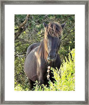Wild Horse Close Up Framed Print by Cindy Croal