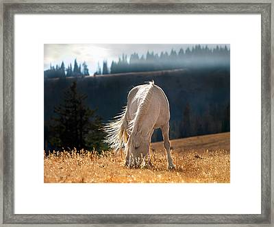 Wild Horse Cloud Framed Print