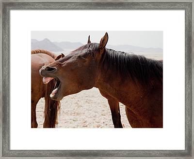 Wild Horse (equus Ferus Framed Print