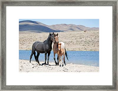 Wild Horse Family Framed Print by Lula Adams