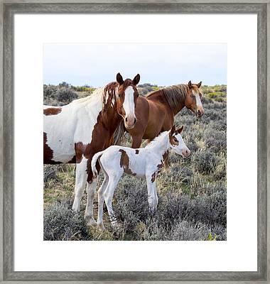 Wild Horse Family Portrait Framed Print