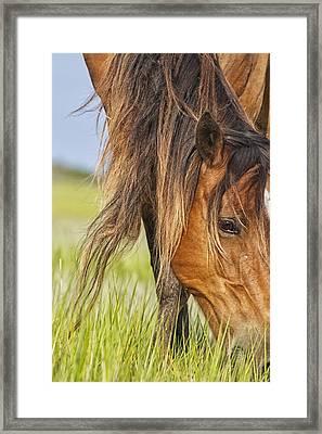 Wild Horse Grazing Framed Print