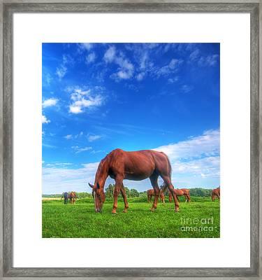Wild Horse On The Field Framed Print by Michal Bednarek