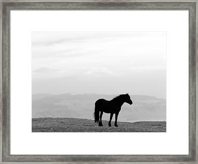 Wild Horse Silhouette Bw Framed Print by Leland D Howard