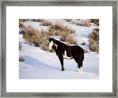 Wild Horse Stallion Framed Print